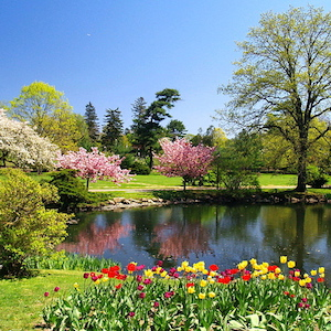 spring blossoms surround pond